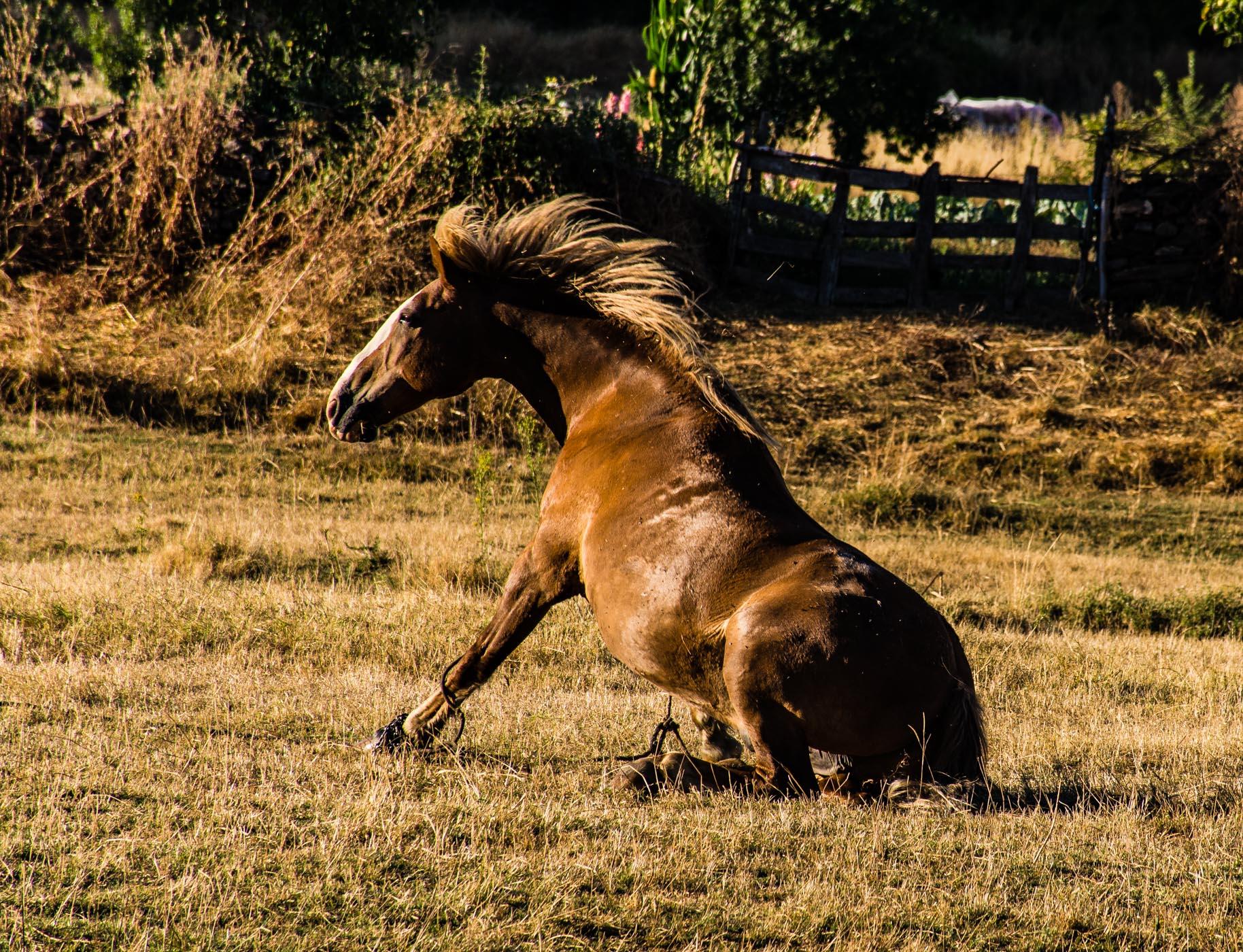 caballo01