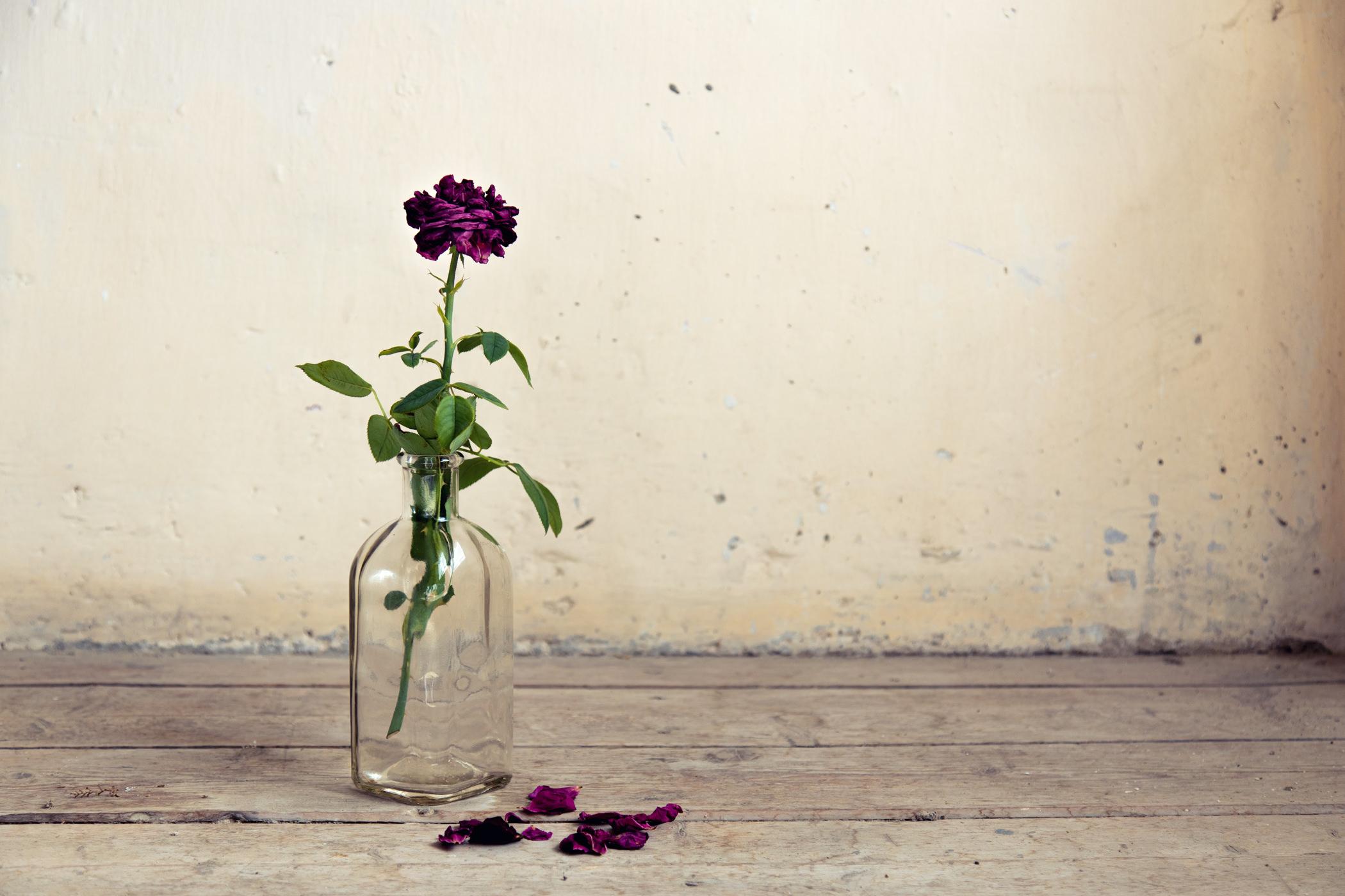 Bodegón con rosa solitaria en bote de cristal